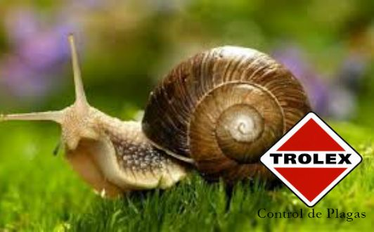 Los caracoles de tierra son unos animales invertebrados pertenecientes al filo de los moluscos y a la clase de los gasterópodos. Están estrechamente relacionados con otros animales como los caracoles marinos o las babosas, con los que comparten orden.