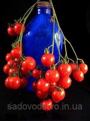 томат Резинтраубе Этот немецкий старинный помидор  впервые появился в Пенсильвании в середине 1800-х годов и до сих пор входит в десятку наиболее  популярных. Сладкие красные плоды образуют большие грозди, с богатым томатным вкусом, который в большинстве случаев у  томатов  черри отсутствует.    Riesentraube  в переводе с немецкого «гигантского гроздь винограда». Мощное растение производят огромный урожай небольших плодов с гарантированно отличным вкусом. Томат  черри «гигантского гроздь…