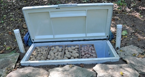 Broken chest freezer buried to use as root cellar.  The author of the article said:  I'm pleased to report that our deep-freeze root cellar had great results!  Mid-winter the potatoes looked just as we'd left them.  In early spring only a little bit of sprouting had occurred.  Later in the spring we sorted through some of the more deteriorated ones to use as seed potatoes... Although a true root cellar is still on the wish list, it's nice to find an easy, inexpensive solution that works so…