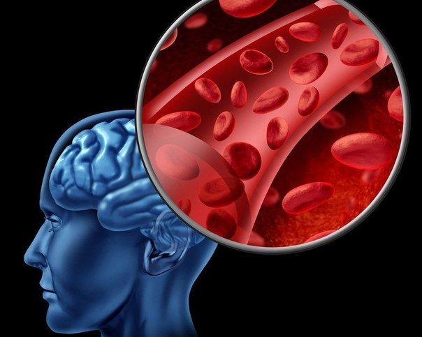 Народные средства для улучшения мозгового кровообращения.  Барвинок. Смесь клюквы, меда, хрена.