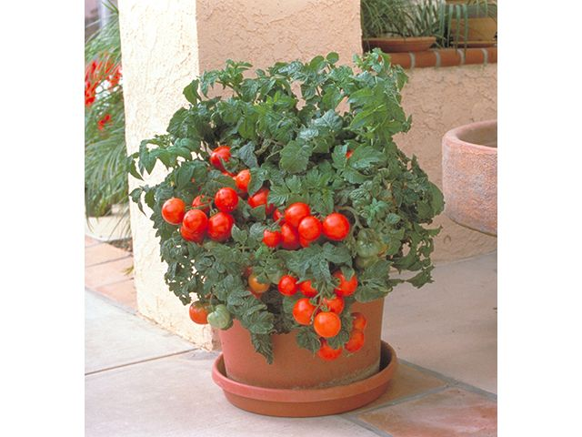 15 tips for successful container gardening.