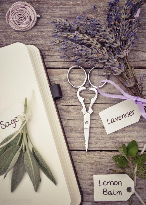 Create an herb journal.