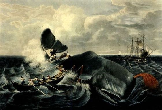 H. Durand or Garnery whale scene as described in Moby Dick ...