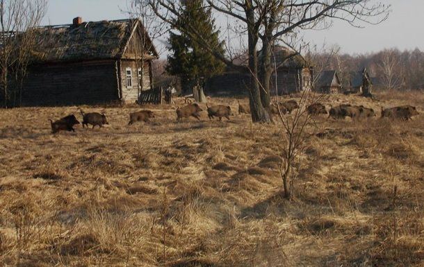 Планета Земля и Человек: Экологи оценили состояние дикой природы в Чернобыл...