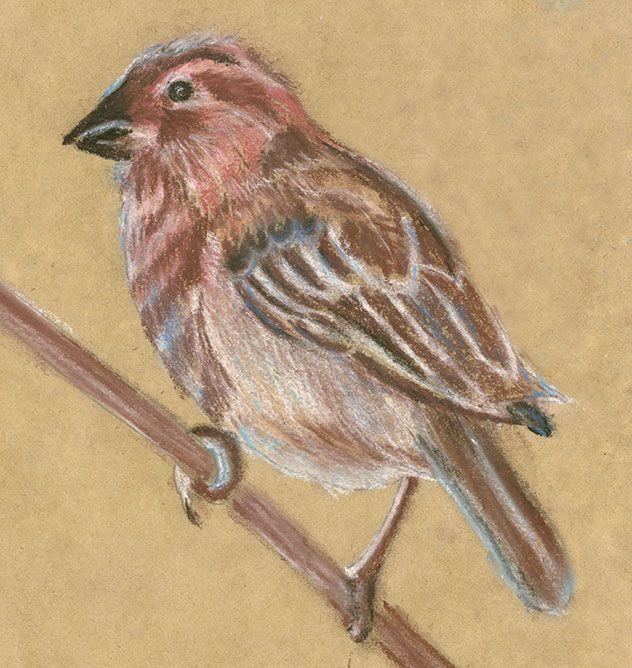 pastel sparrow