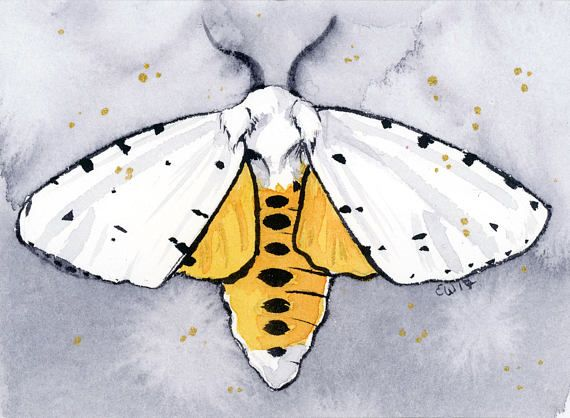 Moth - Original watercolor and gouache ACEO