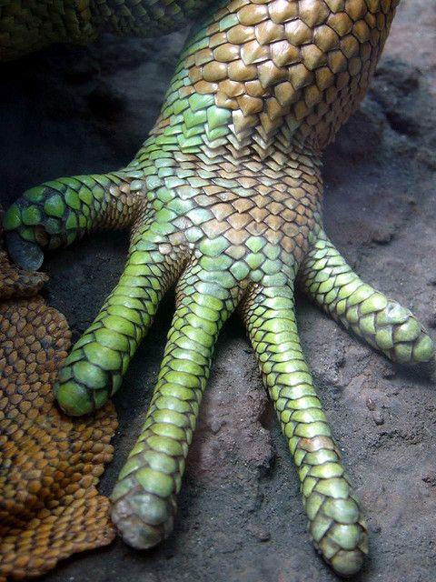 Reptil / Argentina by JohannRela, via Flickr