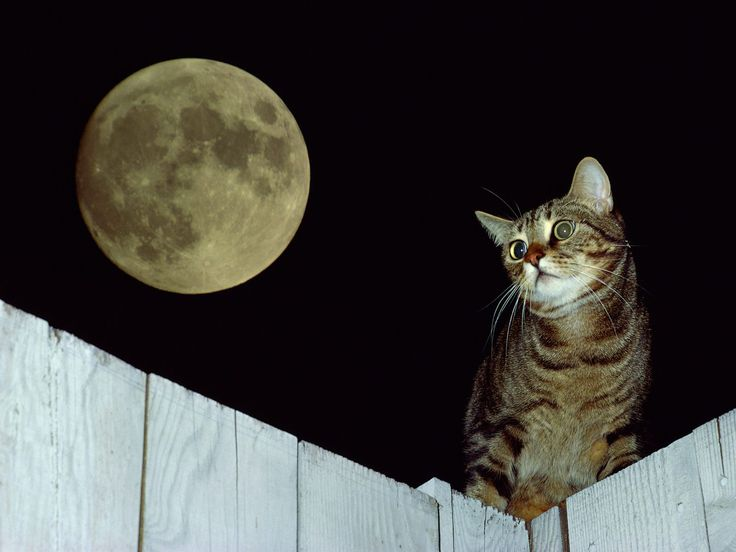 Check Out This Beautiful Photo Series of Cats At Night | 6 | - Three Million Dogs