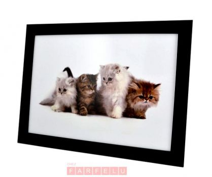 Plateau coussin 4 chats | acceuil