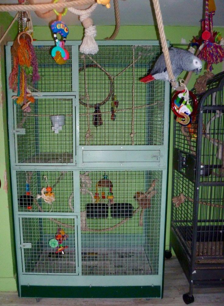 Cage, jouet, ... Pour perroquet