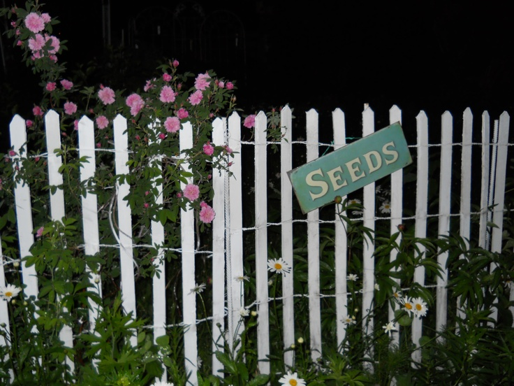 Night Time Photos Look Sooo Nice Cheap Picket Fence Wooden
