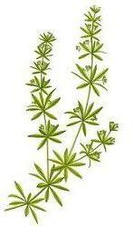 Geneeskrachtige kruiden,kleefkruid in een lotion,geweldig anti rimpel middel