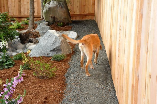 Dogs need a track for patrolling. This would prevent some of the trampled plants I've had in the past.