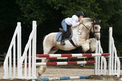 Jumping gypsy!   Horses