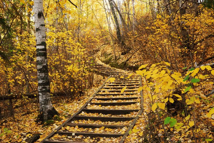 The fall colors in Edmonton's River Valley. | 14 Sites In Alberta That Will Make You Feel Alive