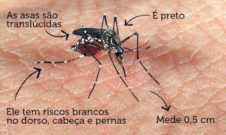 SINTOMAS E TRATAMENTOS   A dengue pode apresentar-se na forma clássica e na forma grave - que necessita de maiores cuidados em leitos de obs...