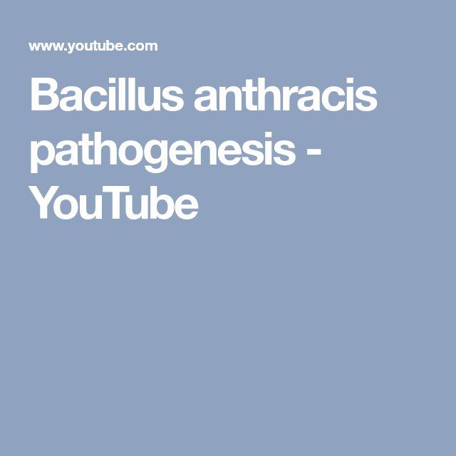 Bacillus anthracis pathogenesis - YouTube