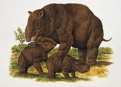 paleolithic wombats the size of bears.   Up to 9 feet (3 meters) long and 70 inches (180 centimeters) tall, some of the marsupials weighed as much as a pickup truck and stood as tall as a person. Others were much smaller, about the weight of a compact car.: 180 Centimet, Pickup Trucks, Life Form, Inch 180, Interesting Junk, Paleolithic Wombat, Marsupi Weighing, Compact Cars, Ancient Animal