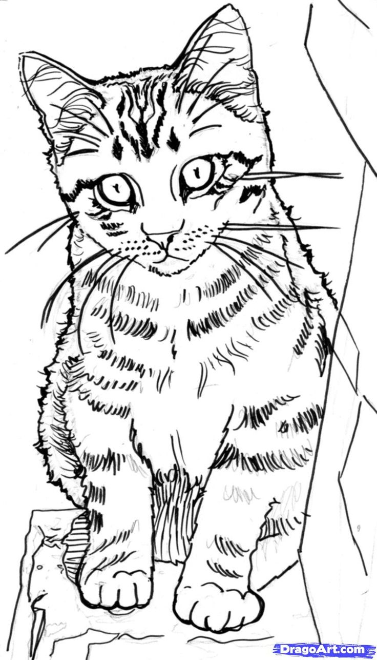 How To Sketch A Cat, Step By Step, Sketch, Drawing Technique, Free