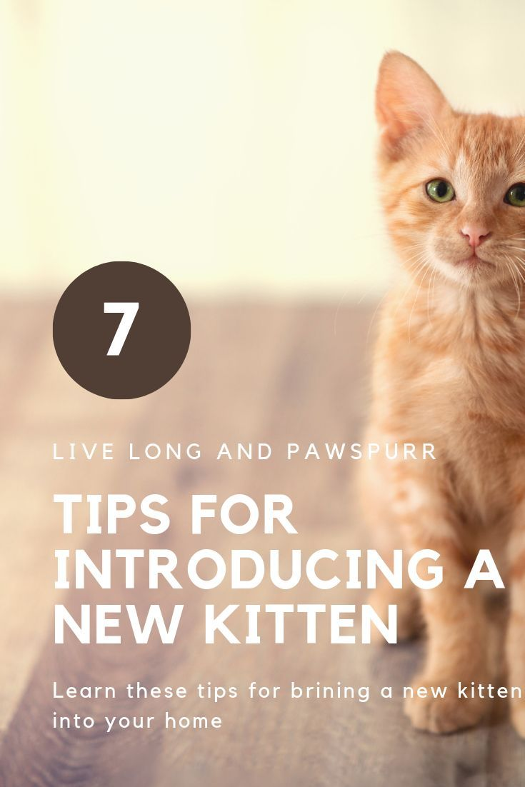 7 Helpful Tips For Introducing A New Kitten To Your Home Live Long And Pawspurr Kitten Drawing Adorable Kittens Funny Kittens Cutest