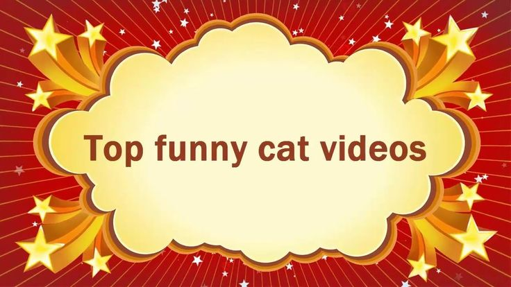 Top funny cat videos | funny cat kitten videos | top 10 funniest cat videos