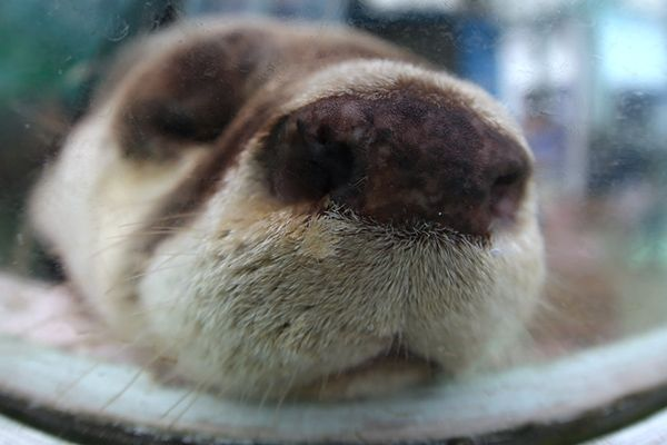 Otter's nose is so boopable - September 10, 2017