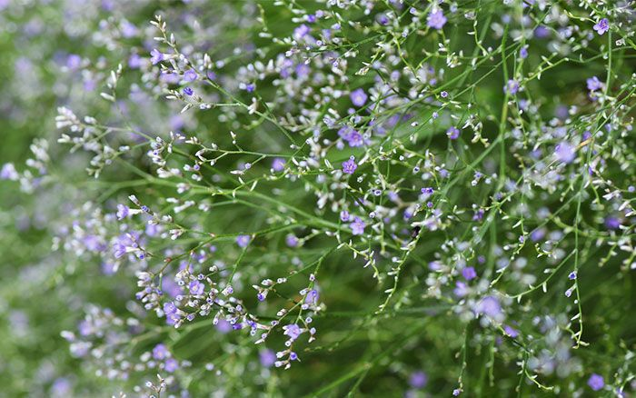 Coastal garden from ITV's Love Your Garden   Relaxed coastal gardens are known for their silvery foliage, grassy greens and bright flowers. The plants are full of colour, texture and