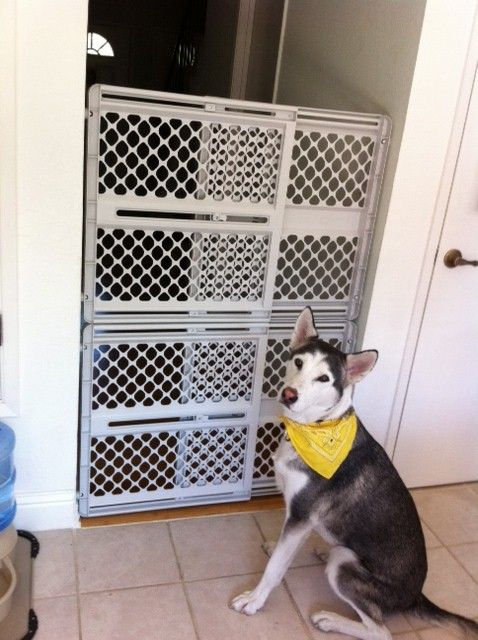 "Stack 2 baby gates for a large dog barrier...an idea. Although that face says ""challenge accepted."""