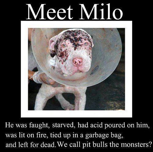 Pit Bulls are not the monsters, people are! thats so sad!