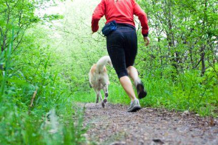 Träna canicross med hunden