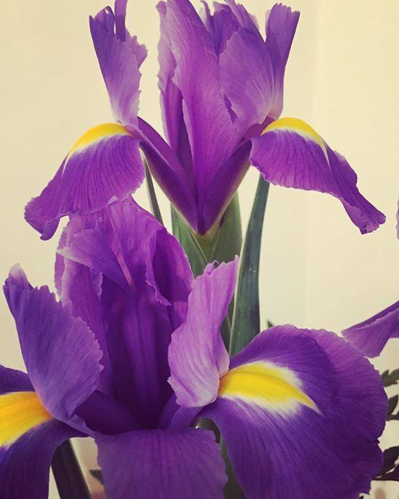#fiori #viola #iris #amore #sorpresa https://t.co/jlLCN9YYpo via Facebook https://t.co/htHus0RMW9 https://t.co/iwwXjM6mDI