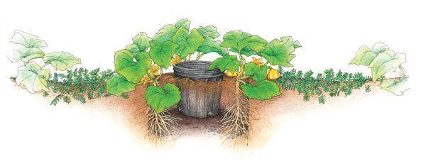 101 jardinería: consejos para el cultivo de la calabaza