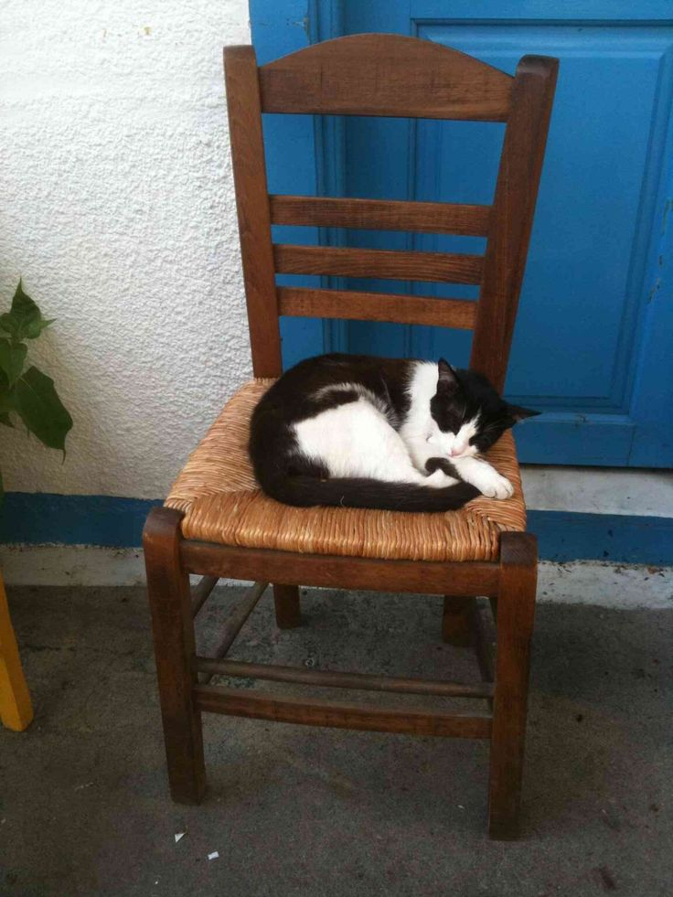 """Such a sweet cat from the island Lesvos where we rent the amazing """"Faros"""" greek luxury villa. Discover it on our website !"""