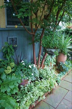 庭のようす : ほんの小さな庭