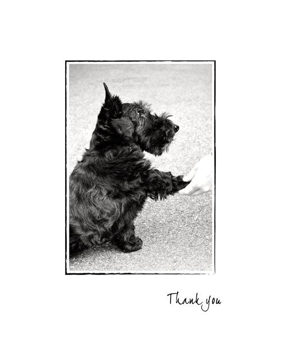 Scottie Dog Thank You Card  Thank You by CattieCoyleDesigns, $5.00