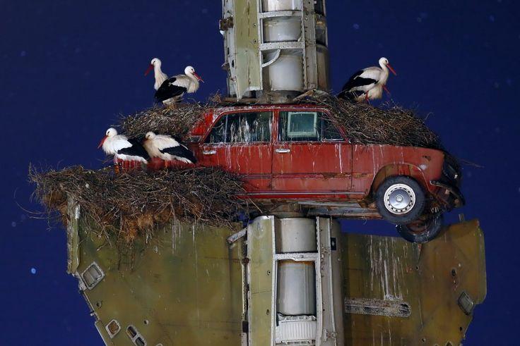 Stork art - Francisco Mingorance
