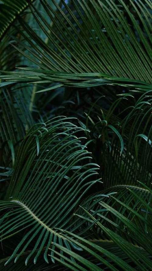 dark     green     nature     palm trees     plants     summer     tropical     wallpaper