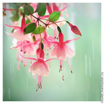 Авторская фото картина с цветами фуксии в квадратном формате © Ануфриева Елена. Авторские фото картины на заказ