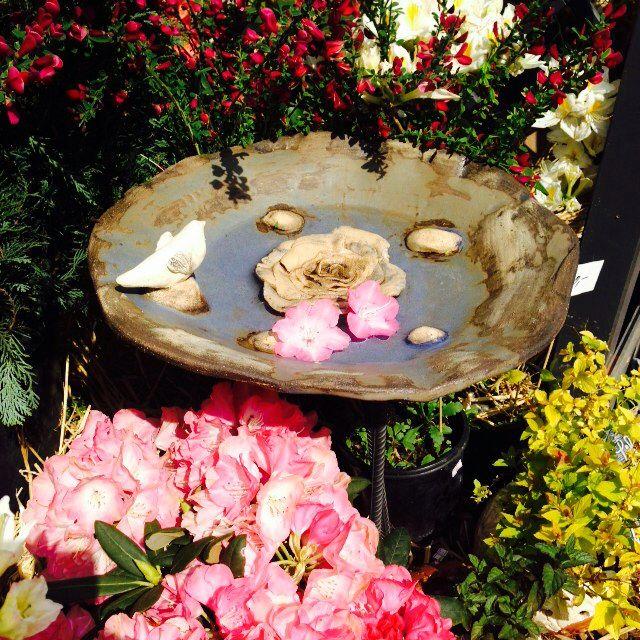 Keramika -pítko pro ptáčky růže