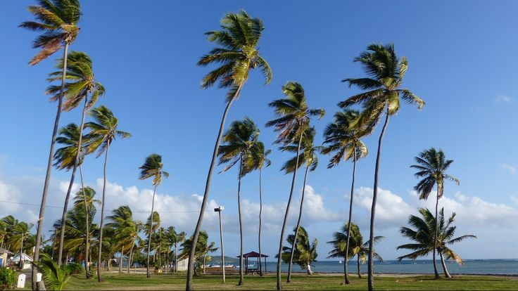 Martinique - Vauclin - Pointe Faula - Plage