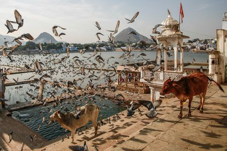 """The Dali Dreams"" A peaceful lake in Pushkar city, India. Photo by Roman Safiyulin -- National Geographic Your Shot"