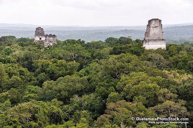 Las estructuras visibles de Tikal. #guatemala #guatemalaphotostock #paisaje #landscape #landscapephotography #tikal #naturaleza #naturegram #nature #natgeotravel #naturephotography #wanderfolk #wandering #wanderlust #wanderland #instagrammersgt #instatravel #travel #instatravel #viajexguatemala