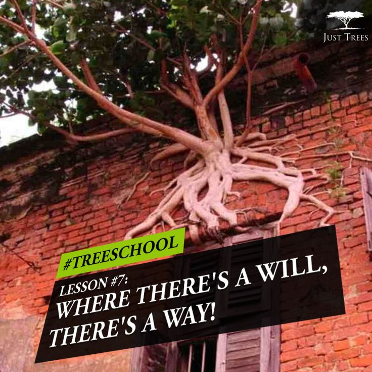 Lesson 7: Where there's a will, there's a way! #TreeSchool