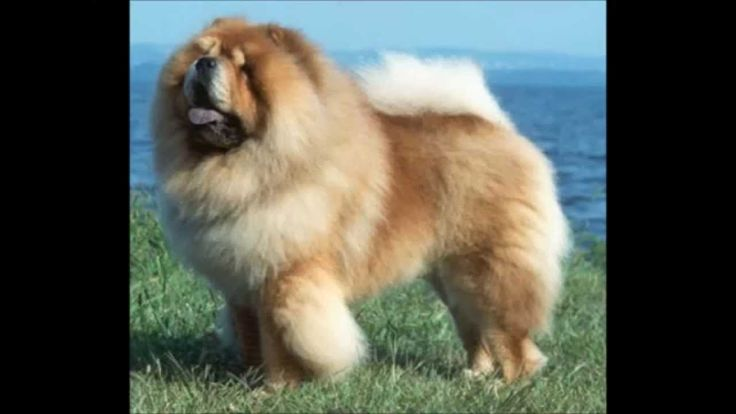 Most Deadliest - Dogs In The World