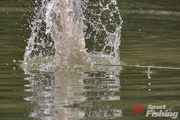 Если вы посмотрите на фото шаров ударяющихся о воду то возможно представите себе каковы будут последствия этого удара уже в воде Мир вокруг нас такой, ЭКСПЕРИМЕНТИРУЙТЕ!  99% всей водки в стране делают на основе спирта «Люкс» – производителям это выгодно, подумал ивдруг встрепенулся: