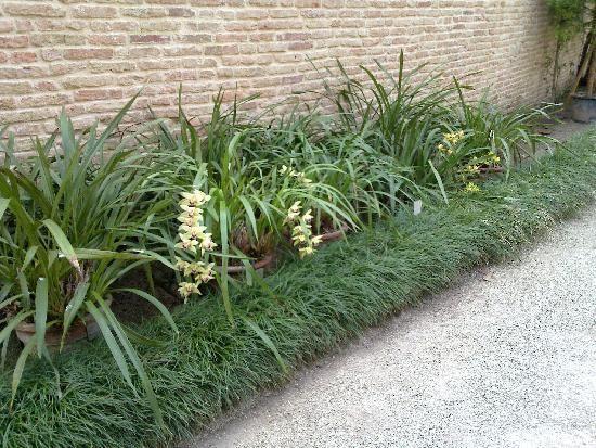 orchidee orto botanico Padova