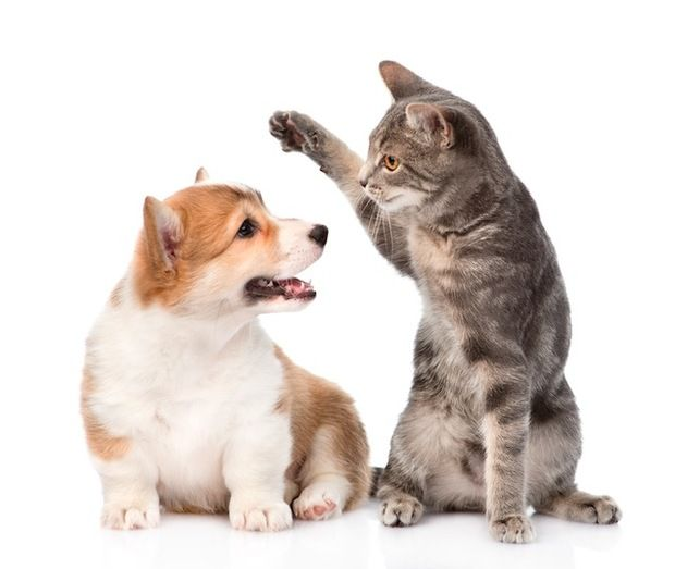 Can Dog Get Urinary Infection From Cat