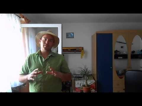 Der Elefantenfuß - Eine Zimmerpflanze, die sehr pflegeleicht ist - YouTube