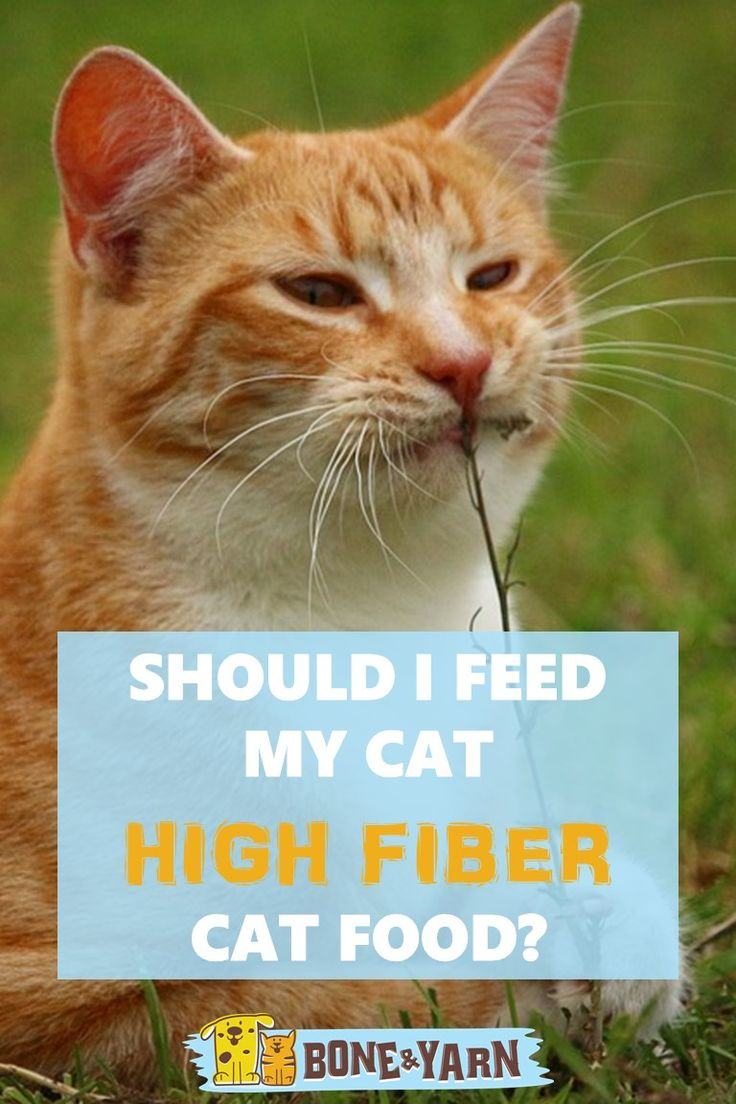 "Whether you have an older cat or a cat with health issues, a lot of people want to know: ""Is it okay to feed my cat a high fiber diet?""  Well, the answer is complicated.  Check out our analysis here: http://www.boneandyarn.com/high-fiber-cat-food/  #cat #cats #catfood"