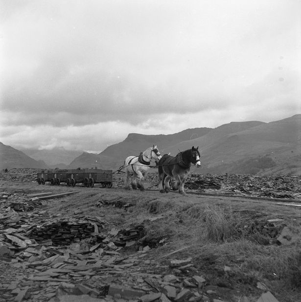 The horse drawn railway at Dyffryn Nantlle before its closure in 1959